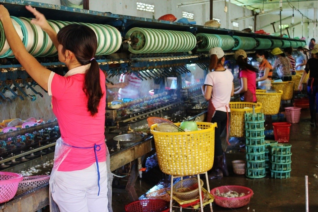 Everyday is a working day at the silk factory in VIetnam