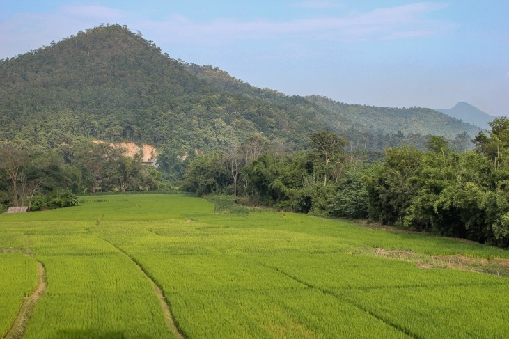 Rice fields and mountains in Chiang Mai, Thailand