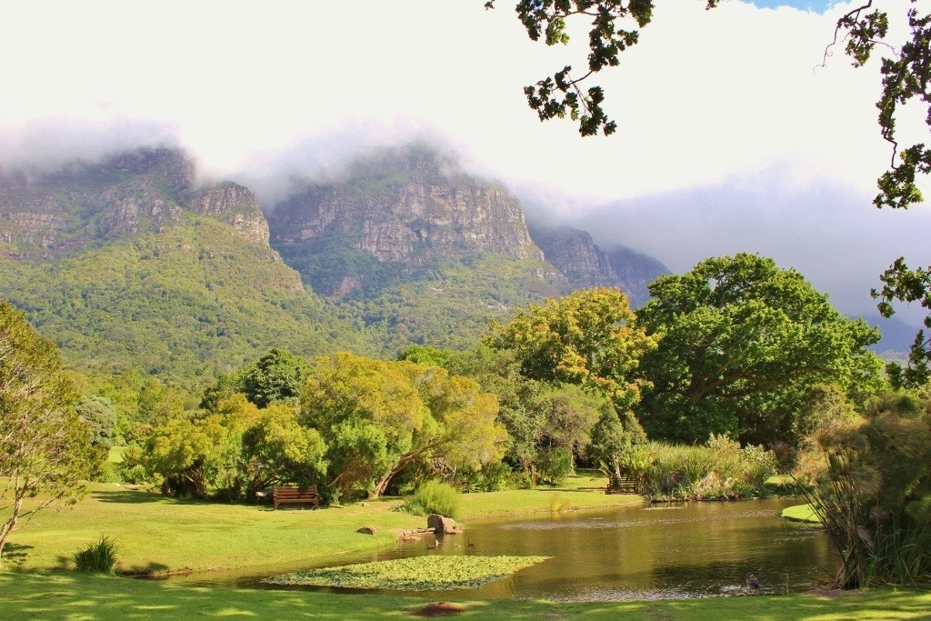 Visiting Kirstenbosch Botanical Garden: The Main Pond and majestic mountain in the background