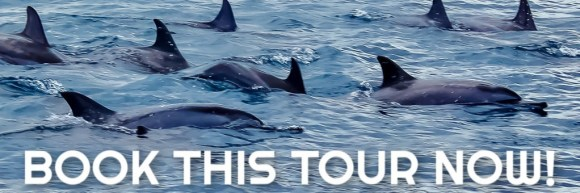 Swimming with Dolphins in Mauritius Tour Book It