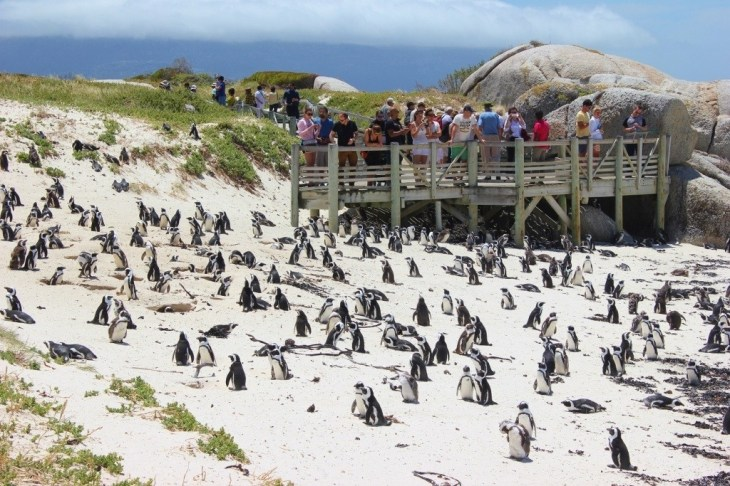 Viewing platforms to view penguins at Boulders Beach near Cape Town, South Africa