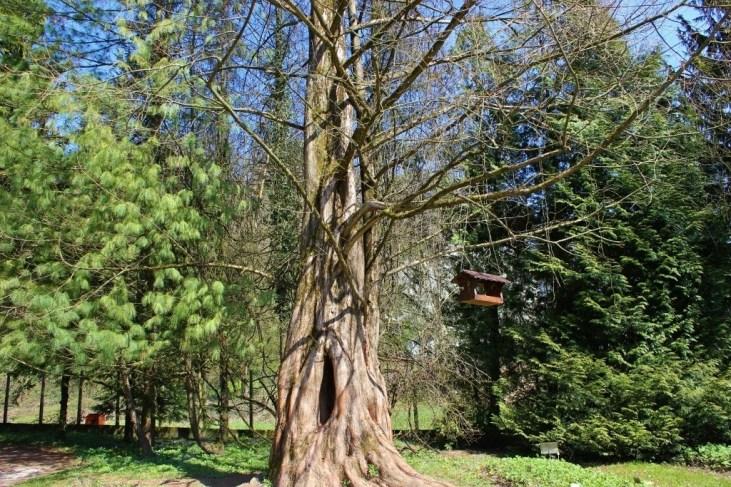 Birdhouse hanging from tree at Ljubljana Botanical Garden in Ljubljana, Slovenia