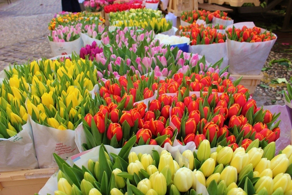 What to see in Ljubljana: The flower market