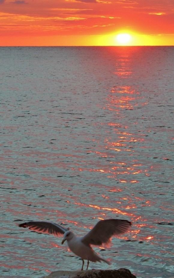 Seagull Sunset, Rovinj, Croatia