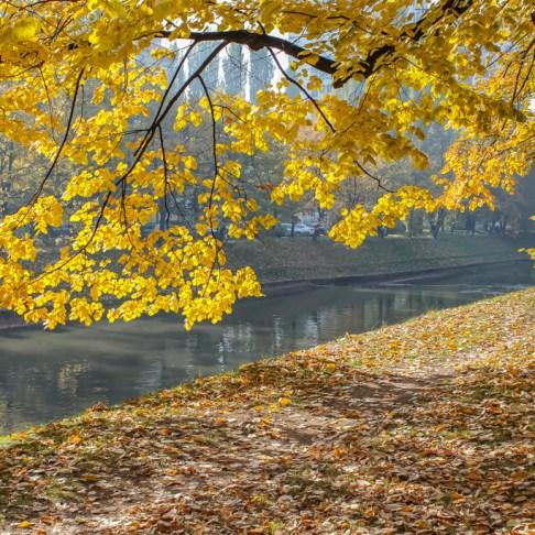 Yellow Autumn leaves on Woodrow Wilson Promenade in Sarajevo, BIH