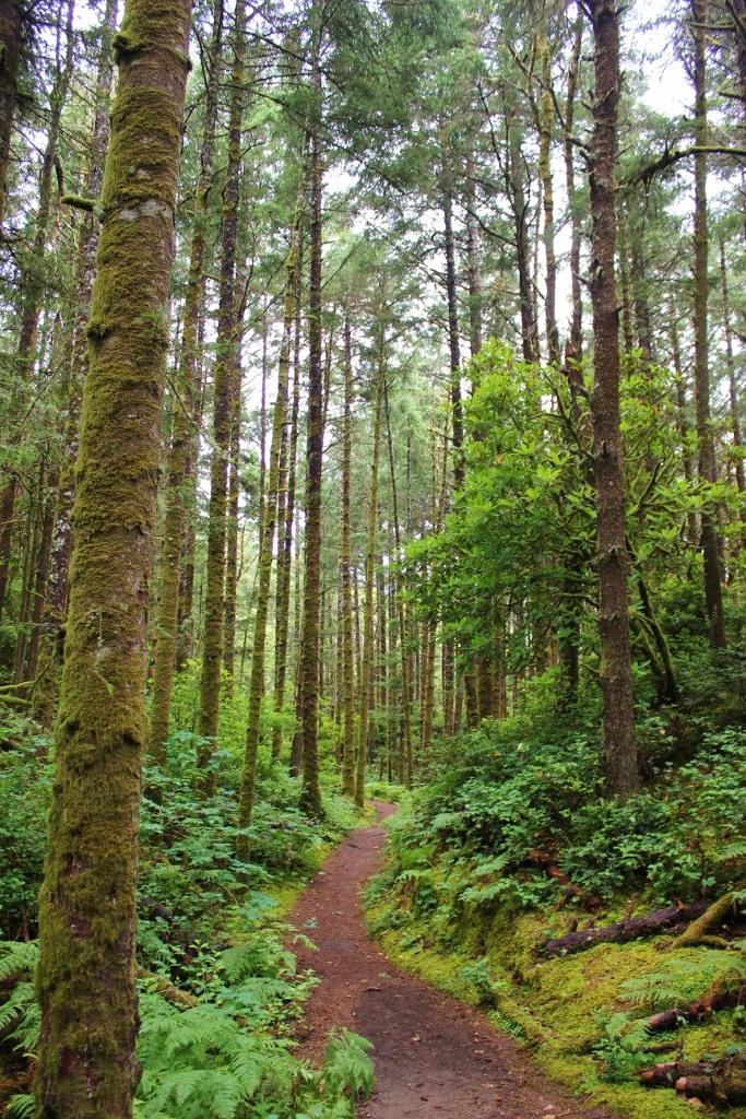 Heceta Head Trail, one of the hikes near Florence, Oregon