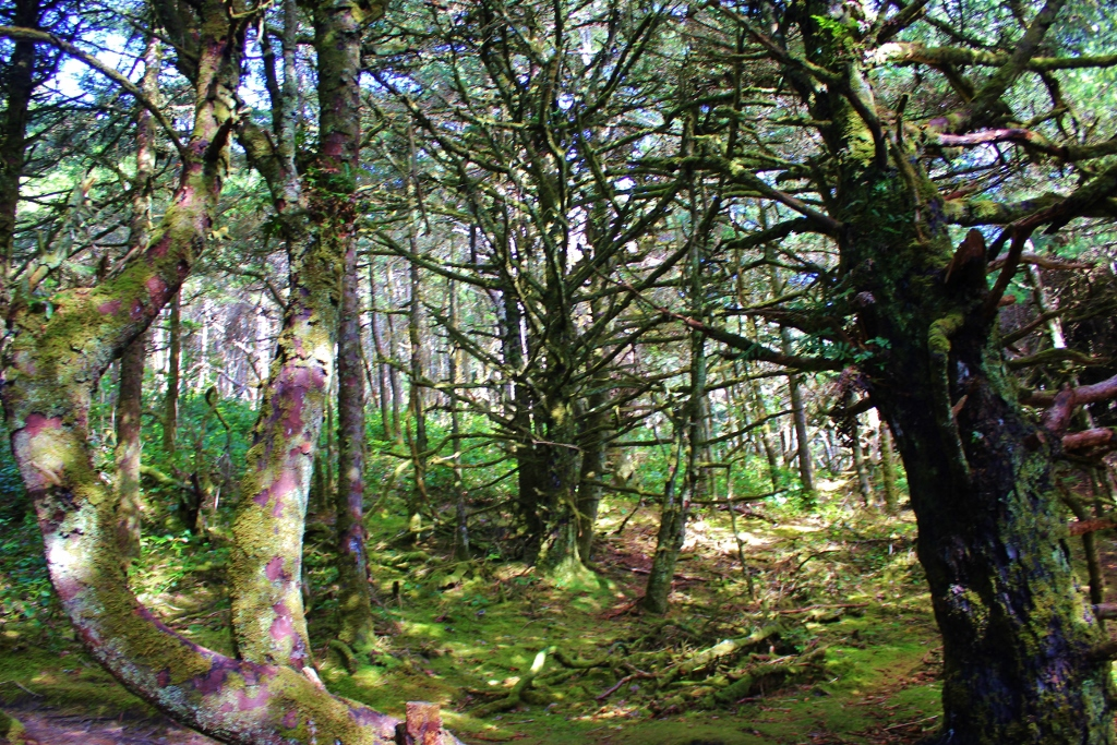 The Hobbit Trail, one of the hikes near Florence, Oregon