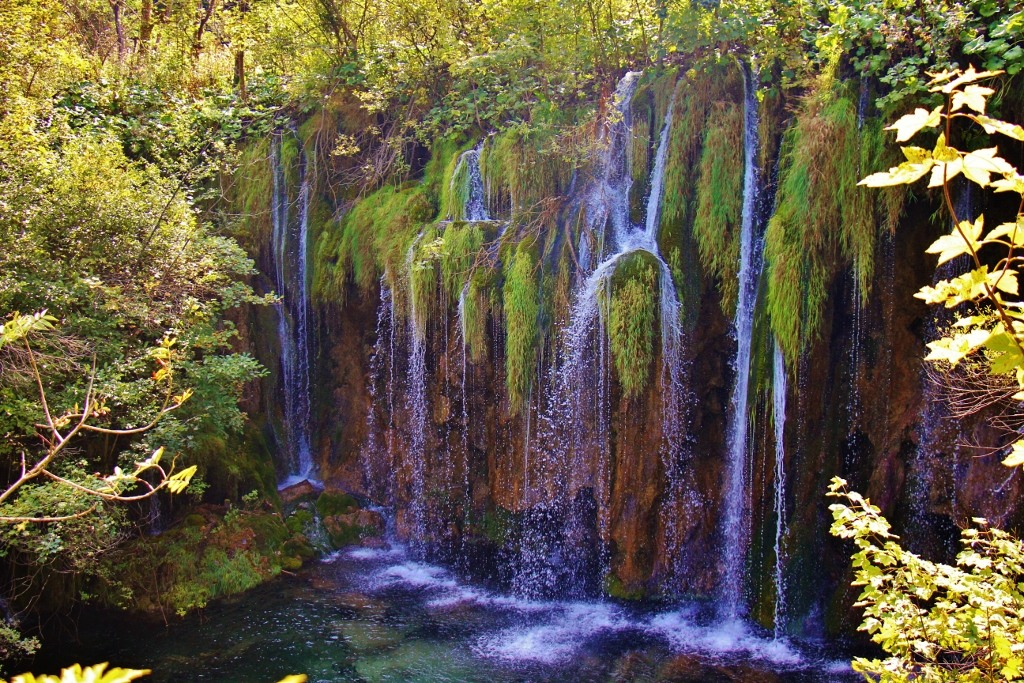 Water drips through foliage, Upper Lakes, Plitvice Lakes National Park, Croatia