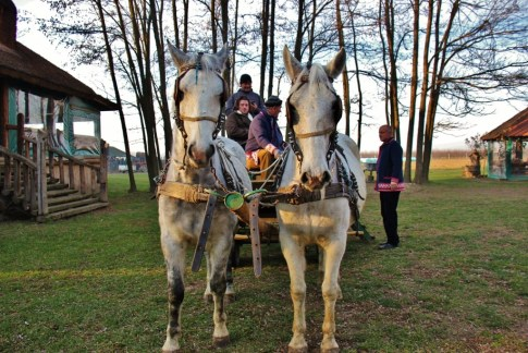 Horses and carriage at Orlov Put Eco Farm