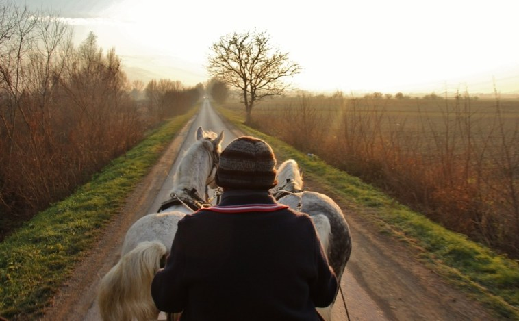 Horse-drawn carriage ride through the countryside