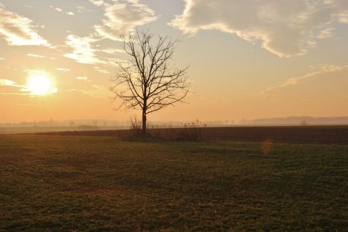 Tree in empty field at sunset in wintertime, Osijek, Croatia