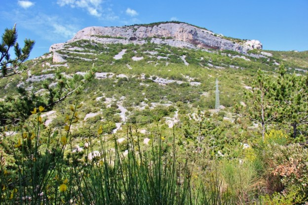 Springtime flowers blooming below Vidova Gora on Brac, Croatia