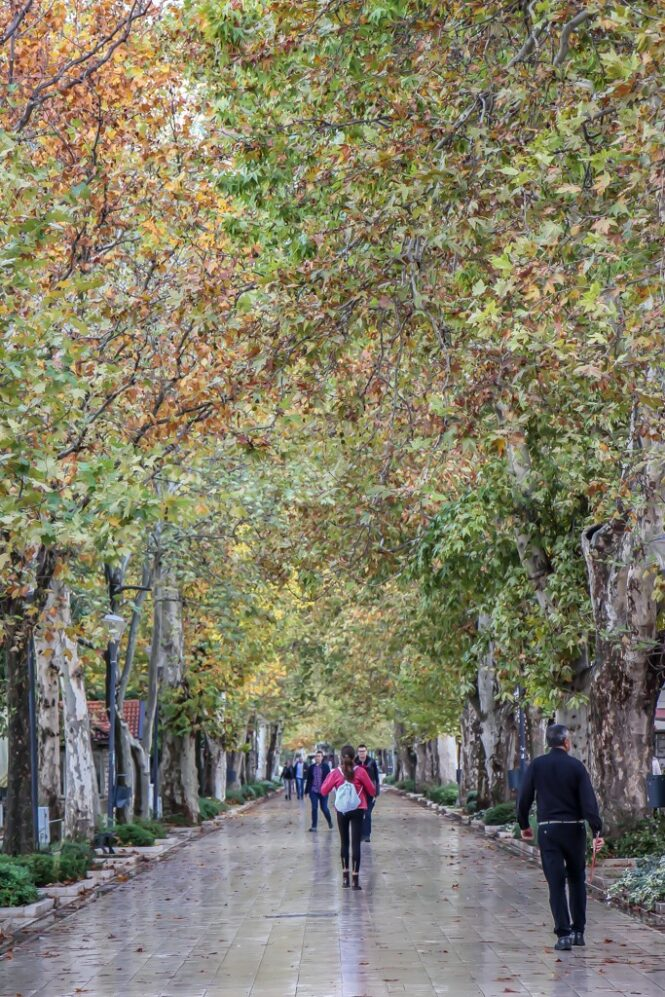 Pedestrian path under a canopy of trees in Mostar, Bosnia and Herzegovina