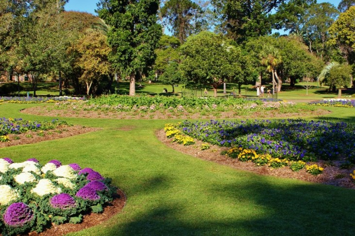 Colorful flowers blooming at City Botanic Gardens in Brisbane, Australia