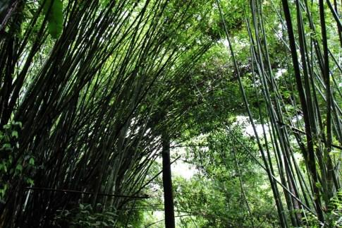 Hiking through Bamboo Grove to Khun Korn Waterfall in Chiang Rai, Thailand