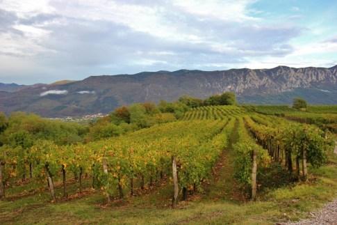 Vineyards of HIsa Vin Rondic in Vipava Valley, Slap, Slovenia
