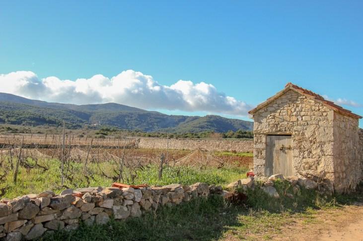 Vineyards on Stari Grad Plain in Stari Grad on Hvar Island, Croatia