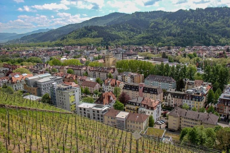 Hillside vineyards on Schlossberg in Black Forest Freiburg, Germany