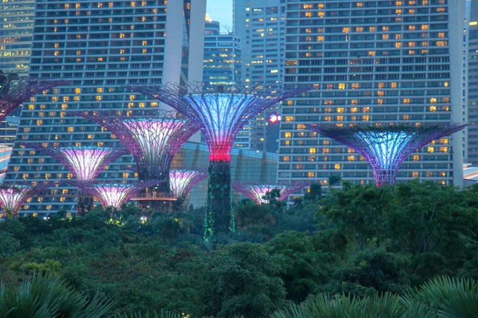 Illuminated SuperTree Grove at Gardens by the Bay in Singapore