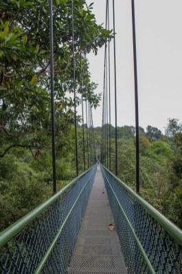 Treetop Walk Suspension Bridge at MacRitchie Reservoir in Singapore