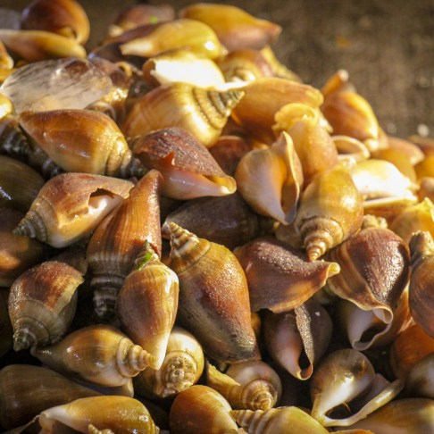 Snails for sale at Friday Night Market in Kamala Beach on Phuket Island, Thailand