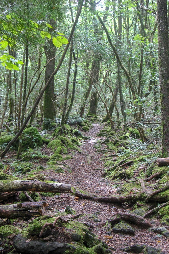 Trail through Aokigahara Forest in Kawaguchiko, Japan