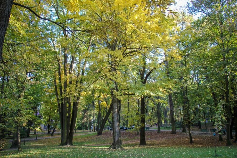 Trees at Ivan Franko Park in Lviv, Ukraine
