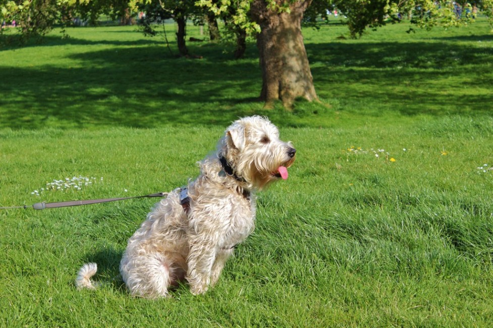 Woody In London, Trusted Housesitters