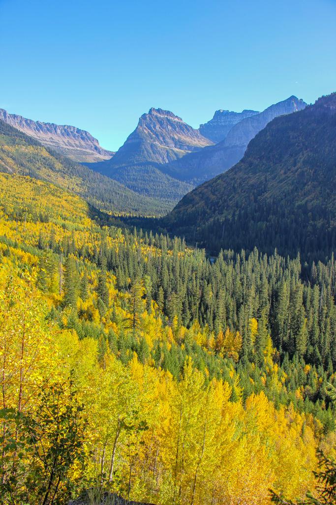 Amazing Autumn Colors, Glacier National Park, Montana