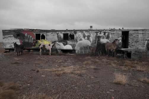 small-horses-+-sheep-in-gray-mtn-i-(faded)