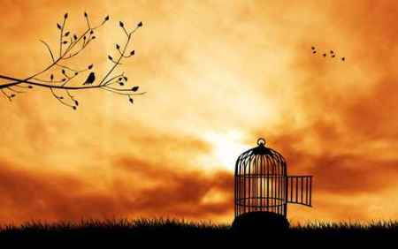 birdcage silhouette