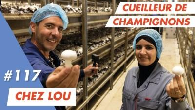 Emploi agroalimentaire : Lou recrute des cueilleurs pour ses champignonnières