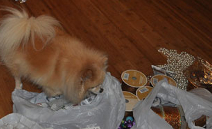 My fluffy helper getting things out of the bag and ready for the tree.