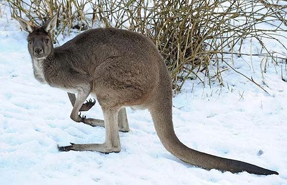 Australians More Likely To Perish In Freezing Winters Than Squelching Summers Jewish Business