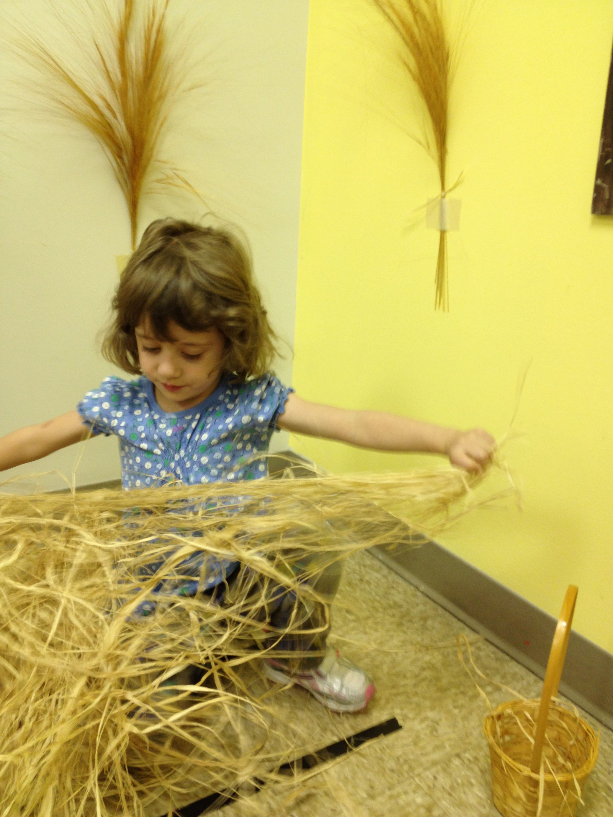 Harvesting Like In The Book Of Ruth Jewish Enrichment Center