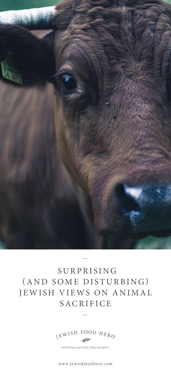 Surprising (and Some Disturbing) Jewish Views on Animal Sacrifice-3-Jewish Food Hero