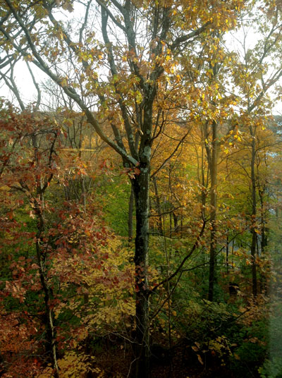 Fall-Trees400x536