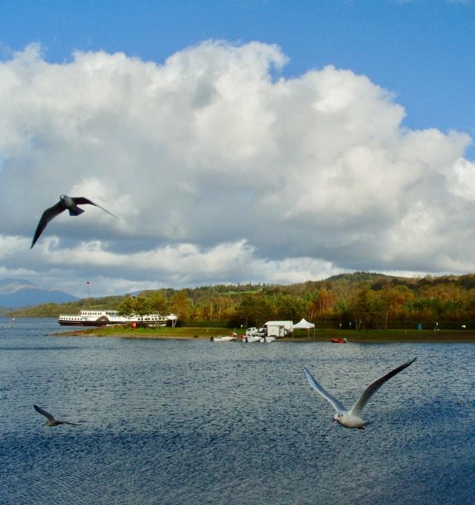 Seagulls Loch Lomond Jez Braithwaite