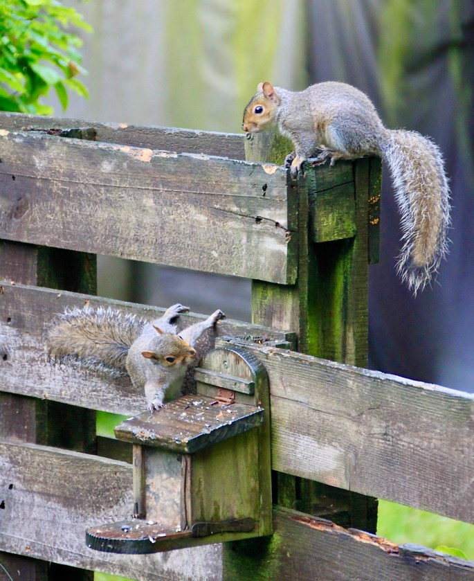 Squirrels by Jez Braithwaite