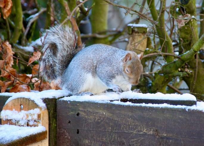 Sneezing squirrel by Jez Braithwaite