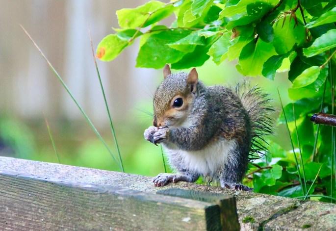 Baby squirrel by Jez Braithwaite