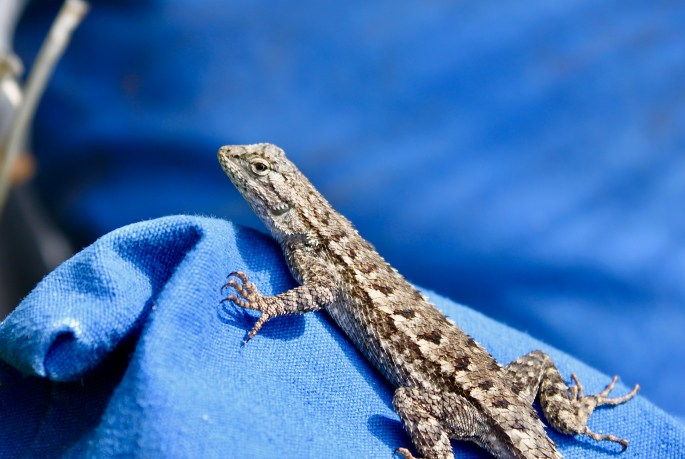 Lizard by Jez Braithwaite