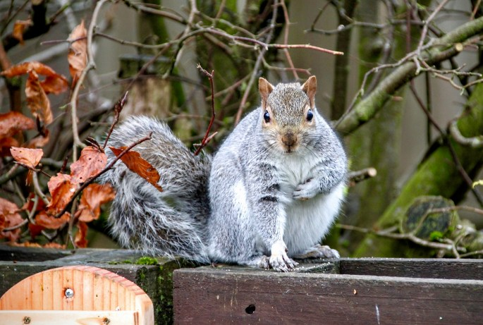 Squirrel by Jez Braithwaite