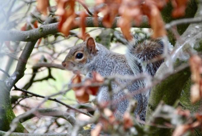 Squirrel hide and seek by Jez Braithwaite
