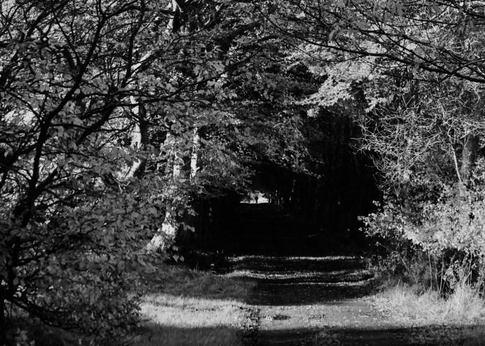 Leafy lane by Jez Braithwaite