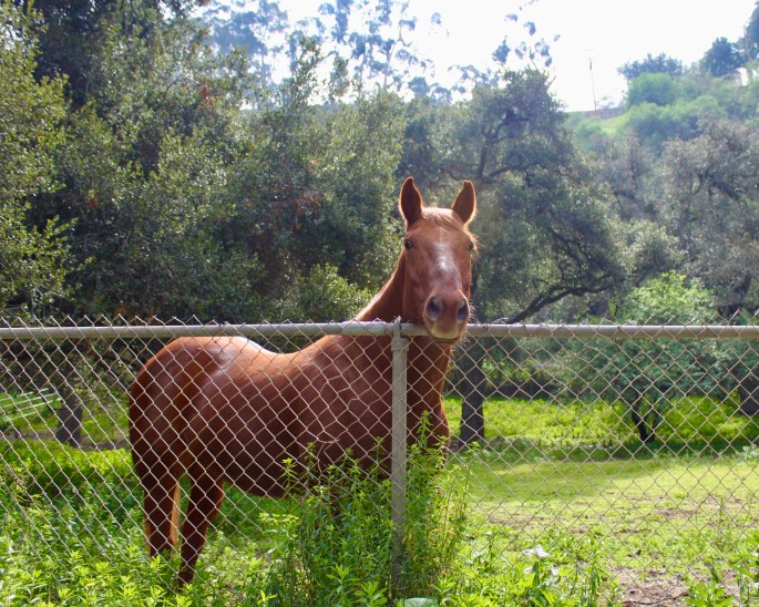 Horse in Serra Canyon