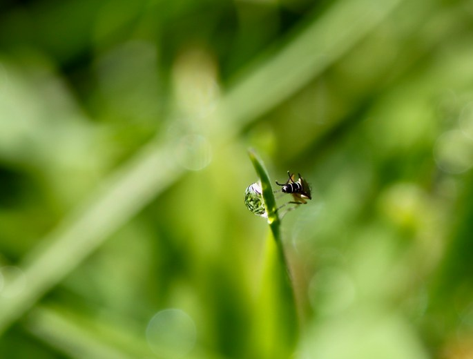 Water droplet & a fly