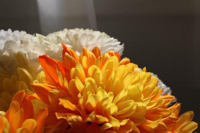 Orange chrysanths