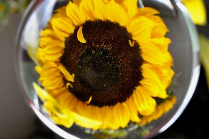 Lensball sunflower