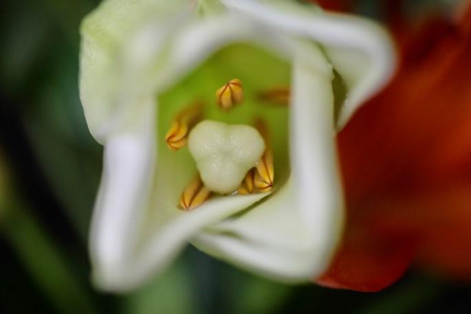 LA Lily at f/2.8